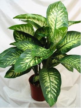 Vias respirat rias top atualidade com for Planta venenosa decorativa